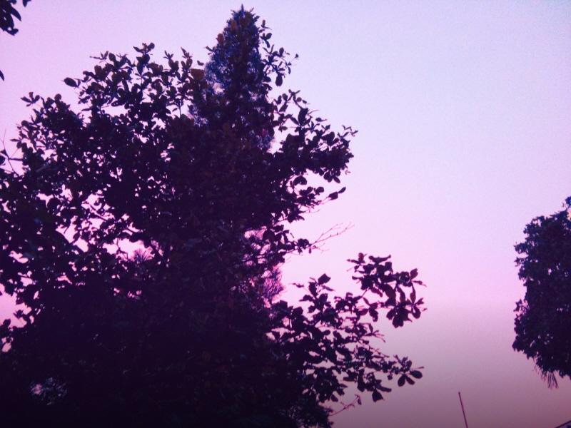 Violence violet sky