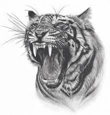 374. Susahnya menggambar harimau! Ini dia hasil gambar yang Saya harapkan.
